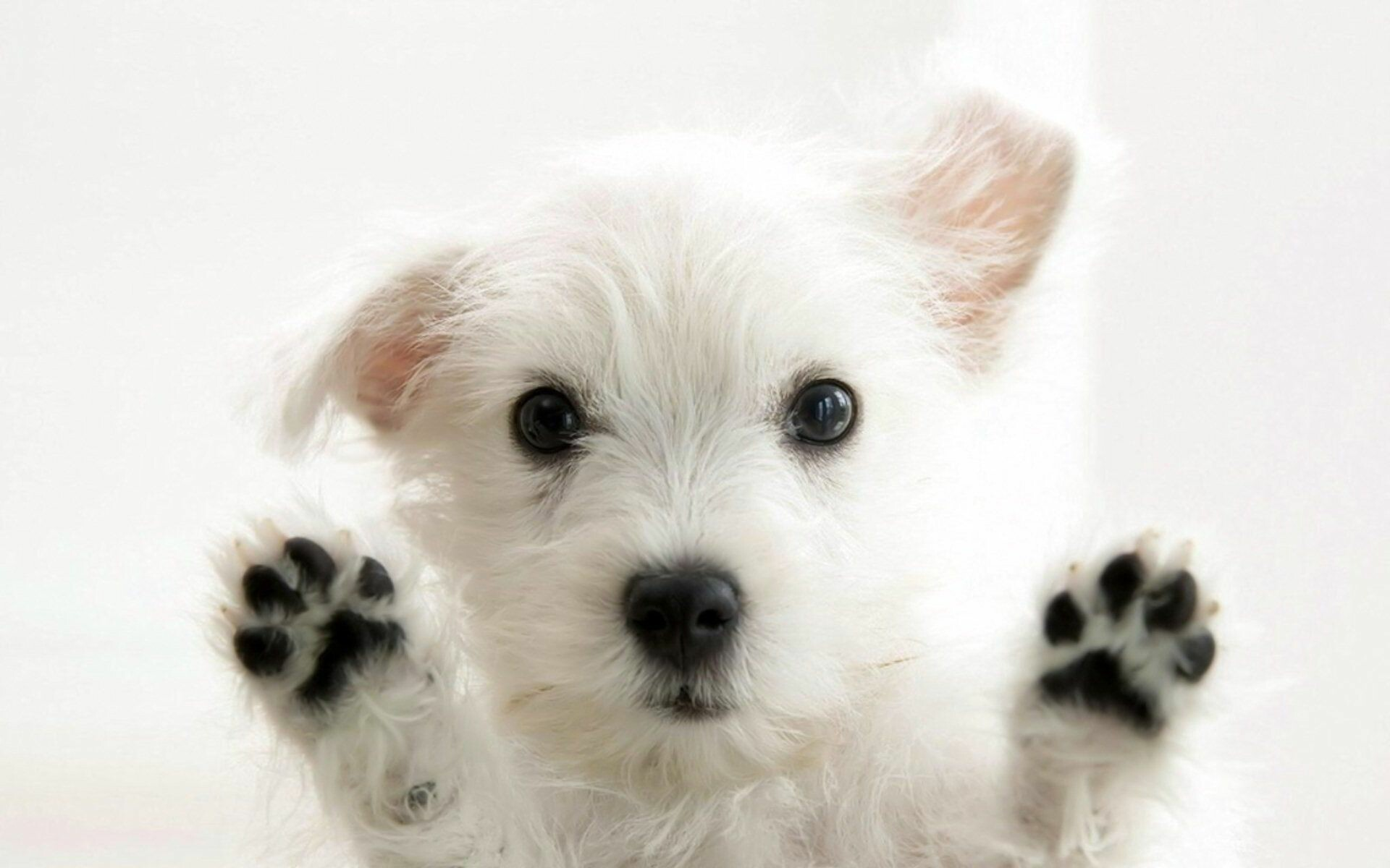 59+ Dog Wallpapers: HD, 4K, 5K for PC ...